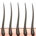 ブラジリアンワックスに必要な毛の長さ