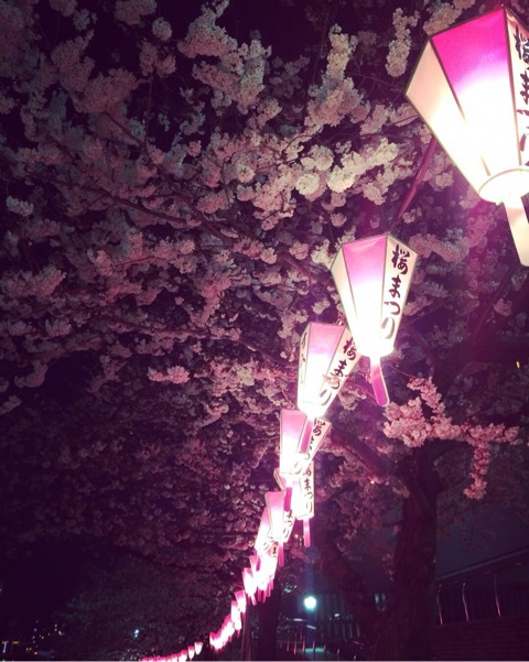 隅田川沿いの夜桜2018